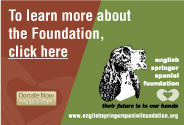 English Springer Spaniel Foundation